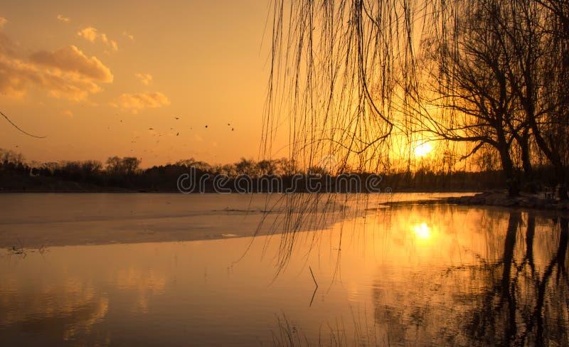 Lake sunset and Flying Birds 2. Lake sunset, Flying Birds and the reflection of tree royalty free stock image