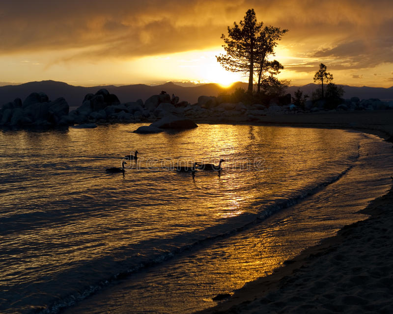 Lake sunset with silhouette and ducks stock image
