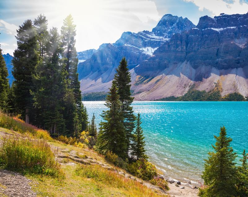 The lake is surrounded by pine trees. Canadian Rockies. Banff National Park. Amazing mountain glacial Bow Lake with emerald water. The lake is surrounded by pine stock photo