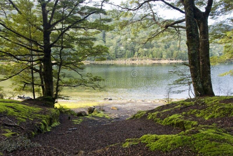Lake Te Anau, South Island, New Zealand royalty free stock photos