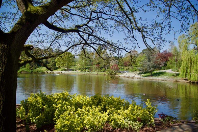 Lake till och med treesna arkivbilder