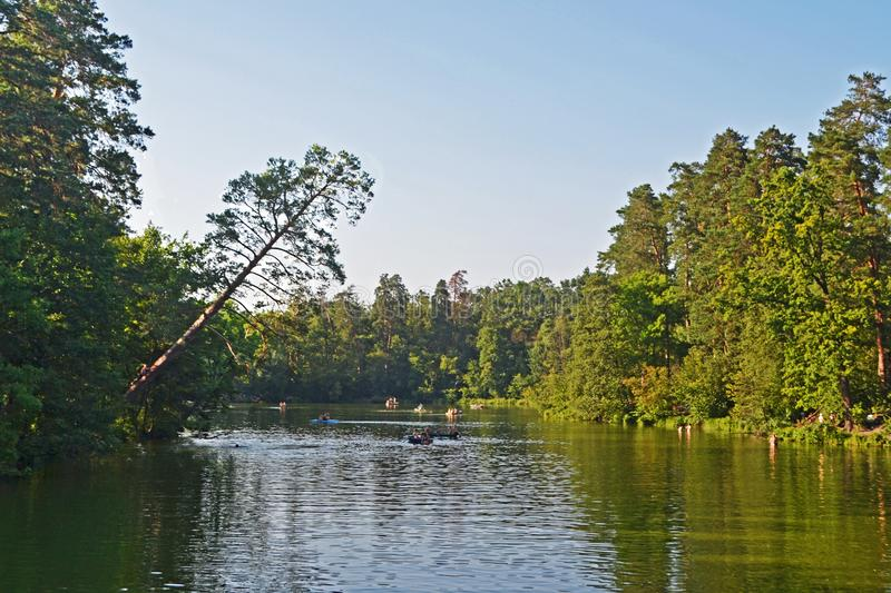 The lake and the tilted pine. A picturesque view of the lake, park and the tilted pine in hot summer day stock photography