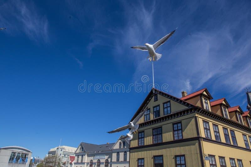 Lake Tjornin. With flying seagull in Reykjavik, Iceland stock photography