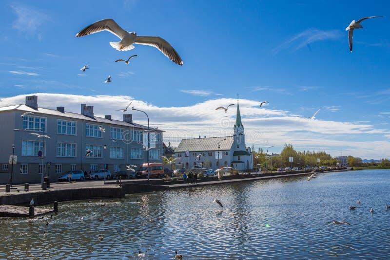 Lake Tjornin. Wiht flying seagull in Reykjavik, Iceland royalty free stock photos