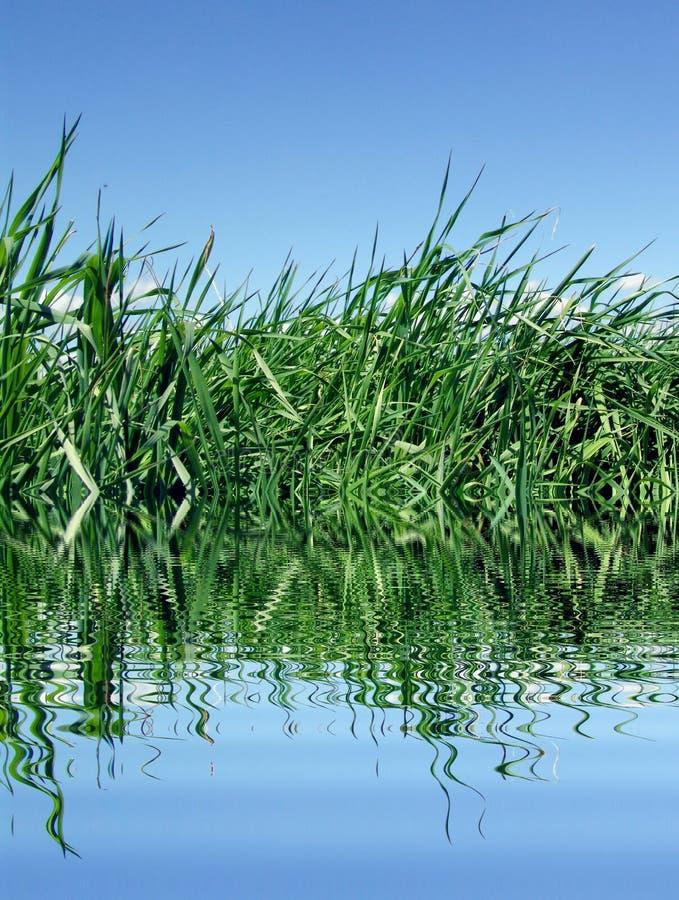 lake trawy obraz royalty free