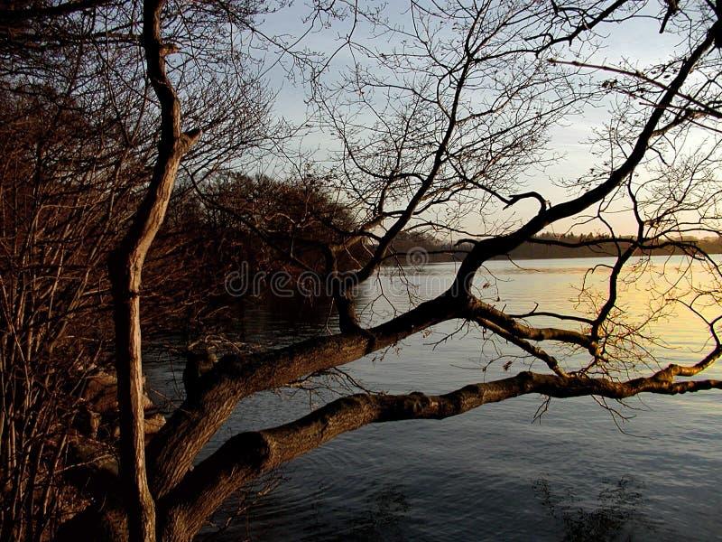 Lake Tree Free Stock Photos