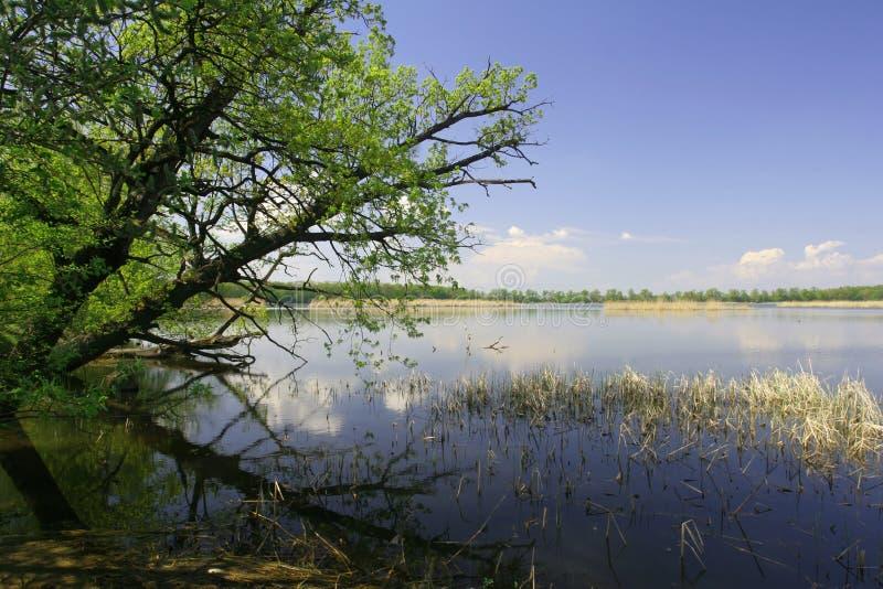 Lake and trees royalty free stock image