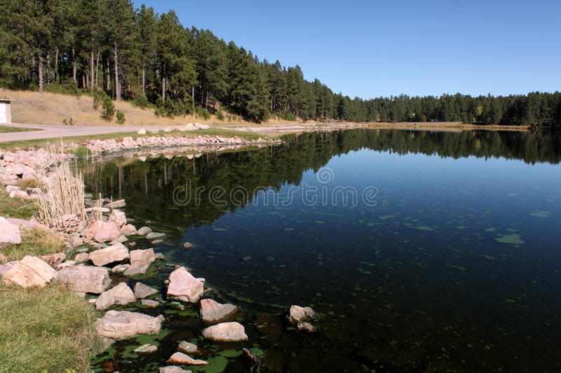 Lake with trees reflection royalty free stock images