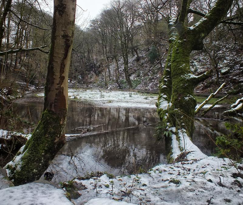 Lake between two trees in snow covered forest with woodland reflected in the water stock photography