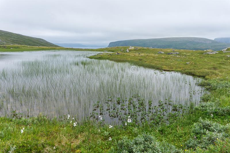 Lake and vegetation of the tundra on the island Soroya, Norway. Lake and vegetation of tundra on the island Soroya, Norway royalty free stock images