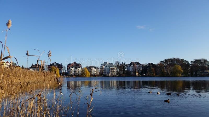 Lake View And Wild Ducks stock image