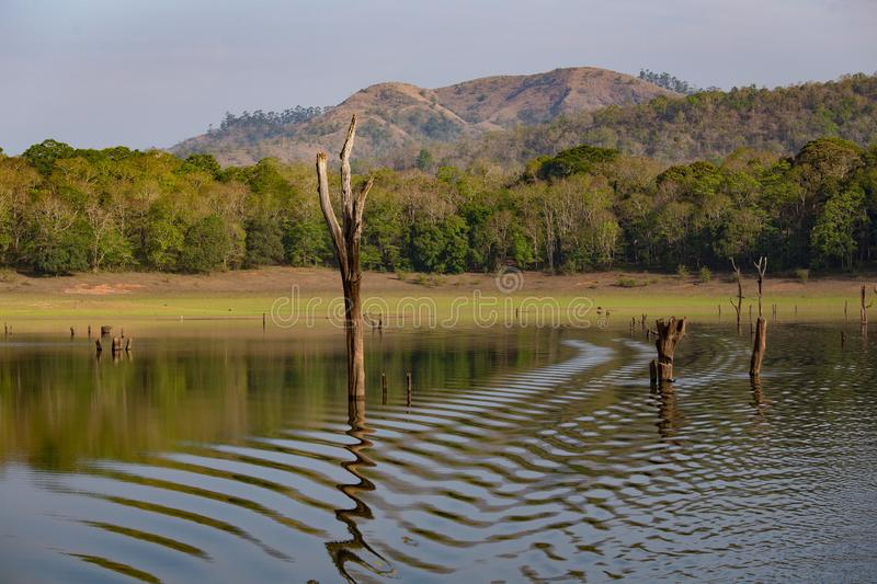 Lake view with dead trees making a pattern royalty free stock images