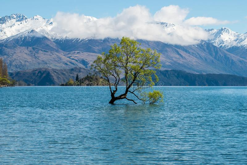 The Lone tree of lake Wanaka the fouth largest lake of New Zealand in spring season. stock photo