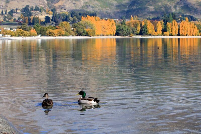 Lake Wanaka,South Island New Zealand. royalty free stock images