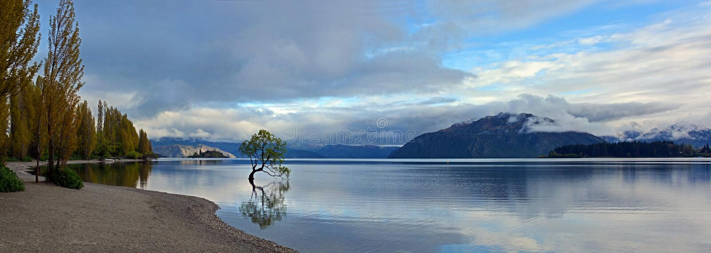 Lake Wanaka & Tree Early Morning, New Zealand Panorama royalty free stock image