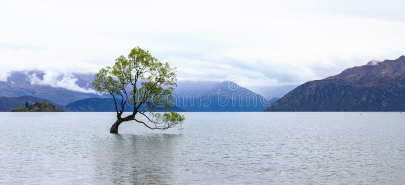 Lake Wanaka tree panorama, New Zealand royalty free stock photography