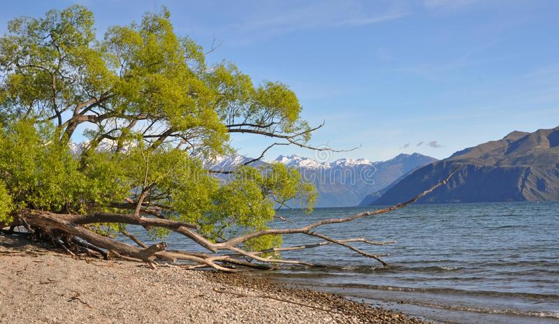 Download Lake Wanaka Willows, New Zealand Stock Image - Image of image, hills: 16998723