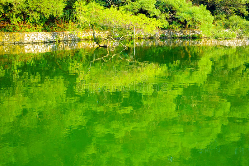 Lake water. Forest reflection in the clear lake water stock photo