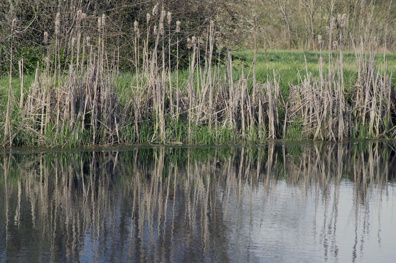 Download Lake water green grass stock photo. Image of pond, tacoma - 42892582
