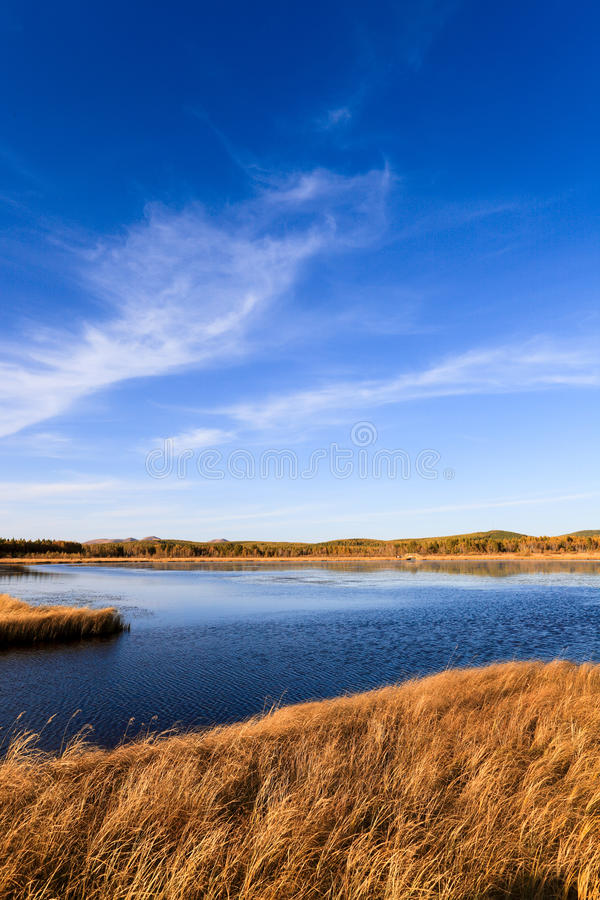 Lake and wetland at autumn stock images