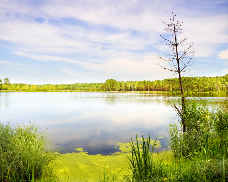 Lake in wild wood. Nature composition stock image