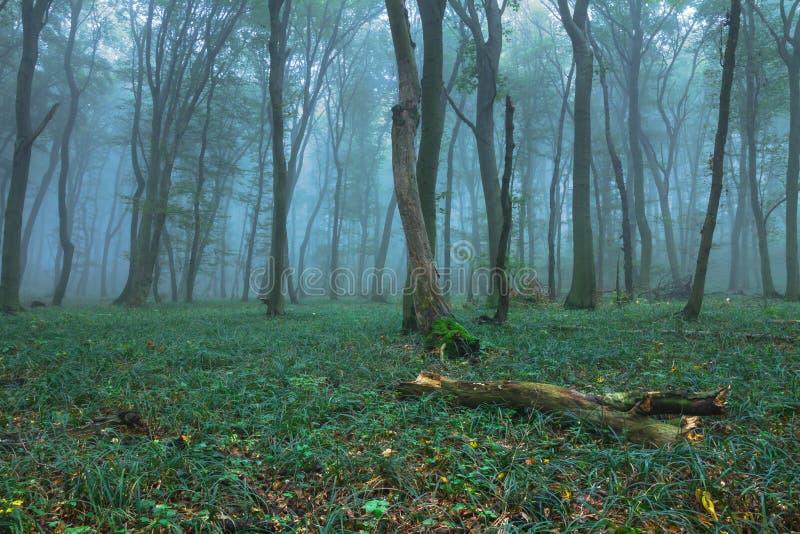 lake wood jesieni odbicia obrazy stock
