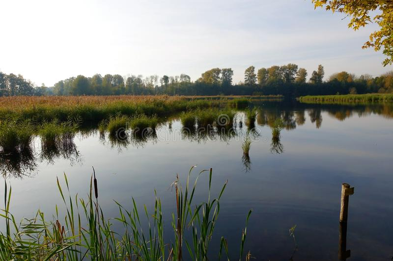 Lake in woods Flevoland. Small lake in Flevoland, young forest. In autumn everything is colorful royalty free stock image