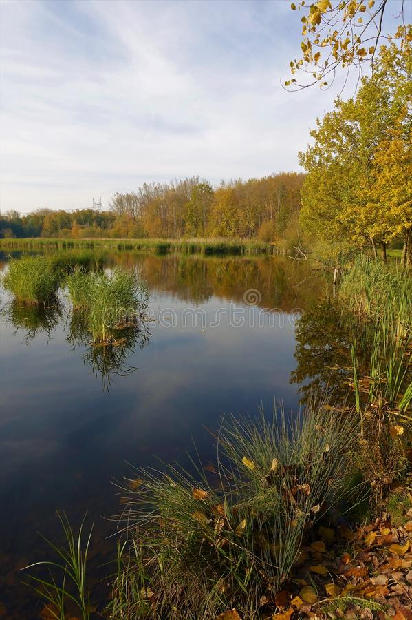 Lake in woods Flevoland. Small lake in Flevoland, young forest. In autumn everything is colorful royalty free stock photography