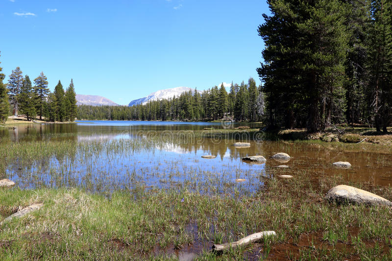 Lake in Yosemite. Water in Yosemite national park with in the background trees and mountains stock photography