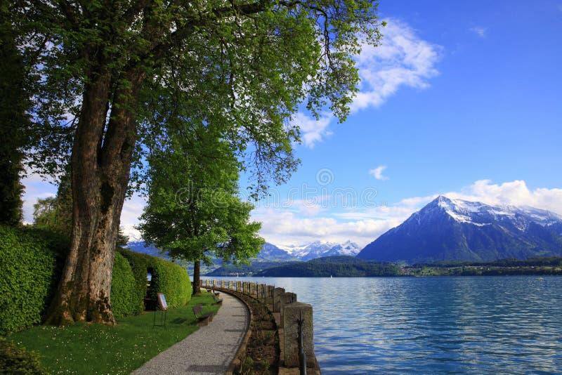 Lakefront av sjön Thun arkivbilder