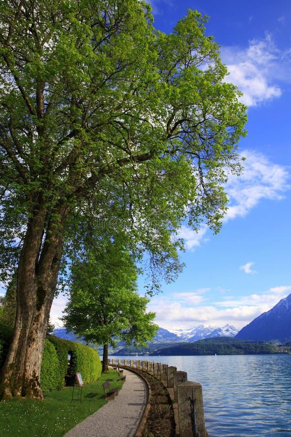 Lakefront av sjön Thun fotografering för bildbyråer