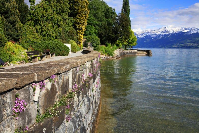 Lakefront av sjön Thun royaltyfria foton