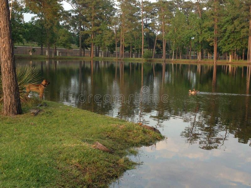 Lakehouse royalty-vrije stock foto's