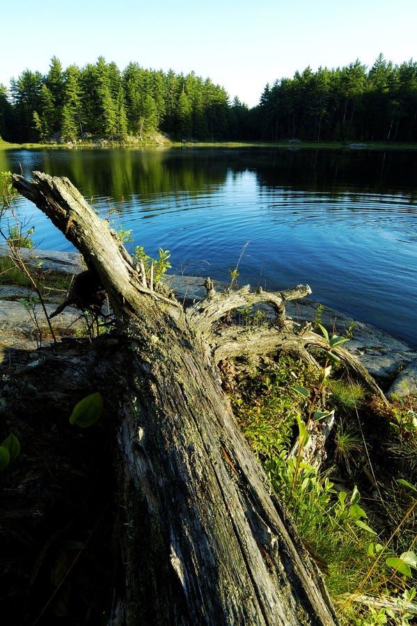 Lakekrusningar Arkivfoto