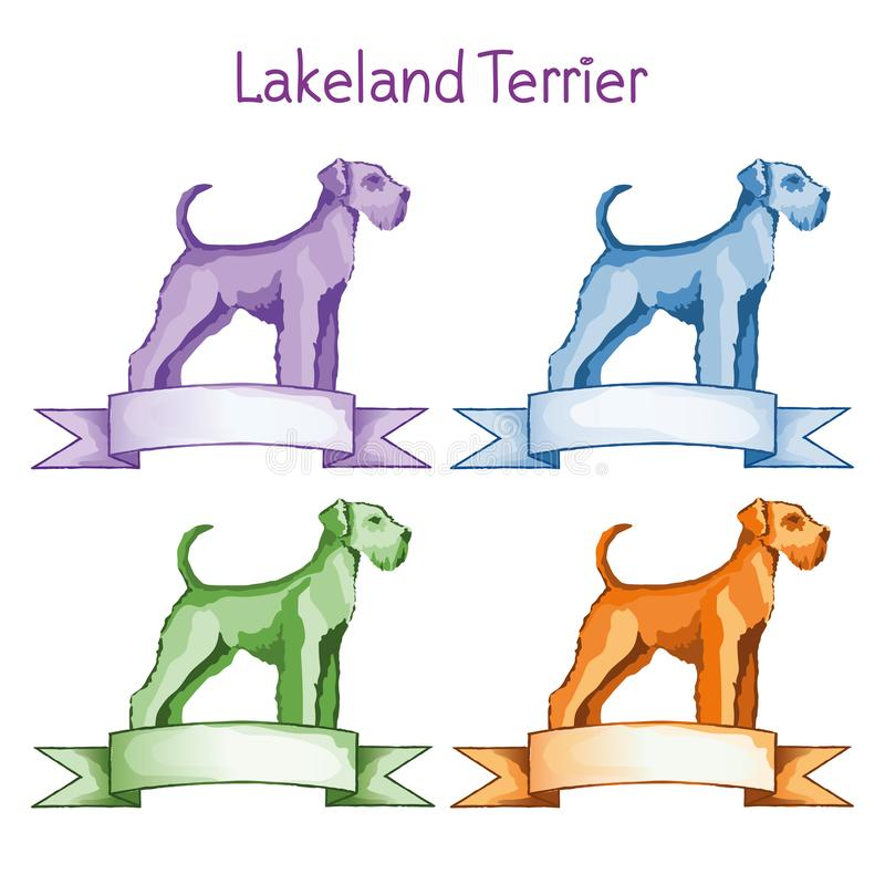 Lakeland Terrier arkivfoto