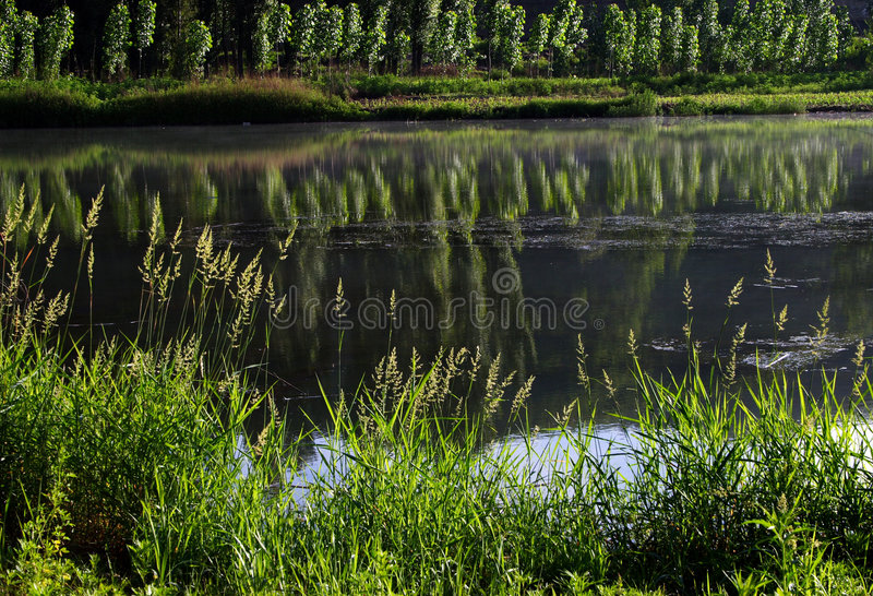 Download Lakes stock photo. Image of river, rivers, lakes, trees - 945338