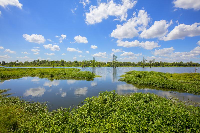 Lakes In Florida Wetlands royalty free stock photo