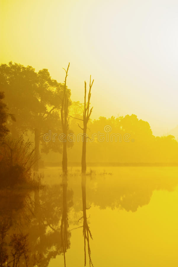 Lakes and trees. Winter morning, the lake has been dyed a golden yellow, two dried tree reflection in the lake royalty free stock photo