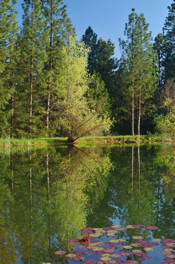 lakeshore άνοιξη στοκ εικόνες