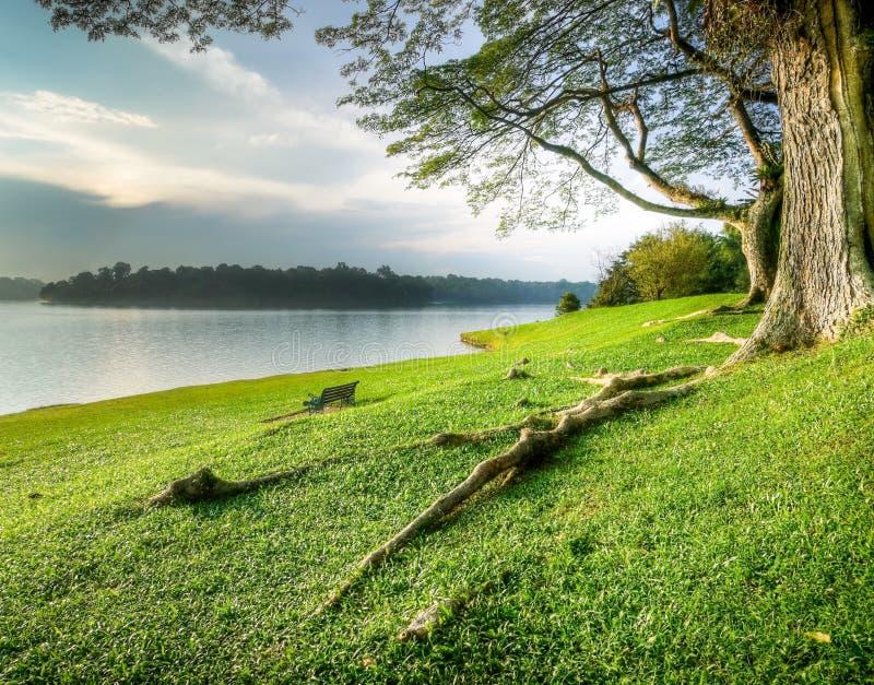 lakeshore grands arbres herbeux dessous image libre de droits