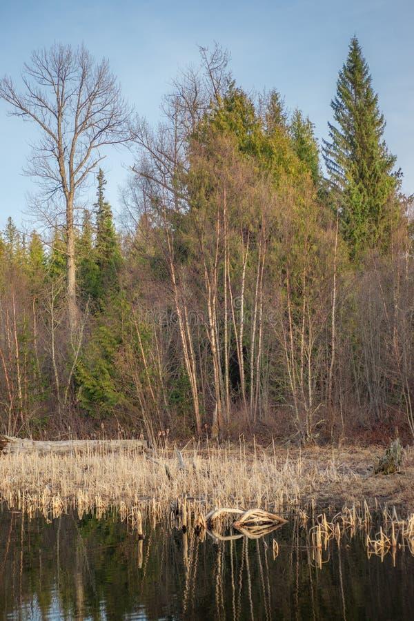 Lakeshore roślinność Nabrzeżne góry obrazy stock