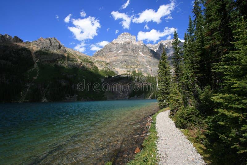 Lakeshore Trail at Lake O'Hara stock image