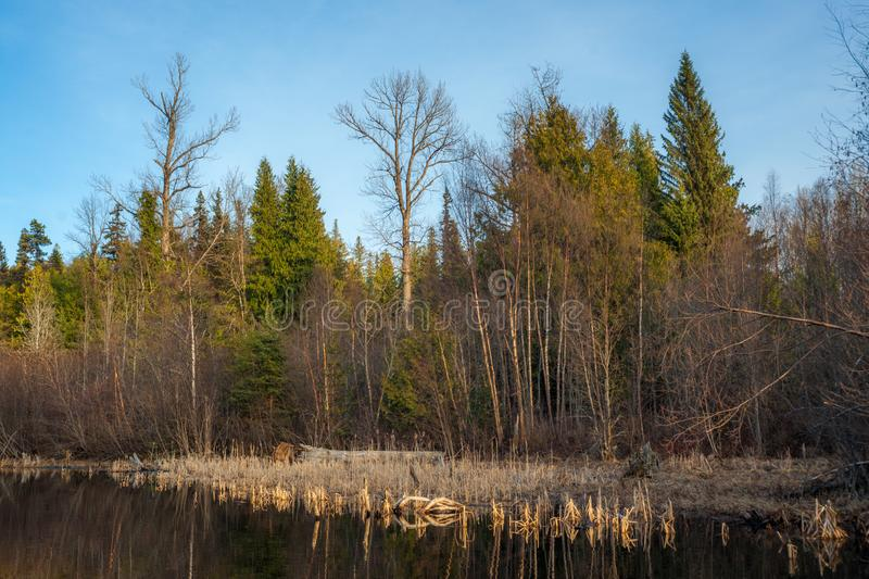 Shore Vegetation in the Evening Sun. A lakeshore vegetation is displayed in a beautiful evening light with the lake surface being calm stock images