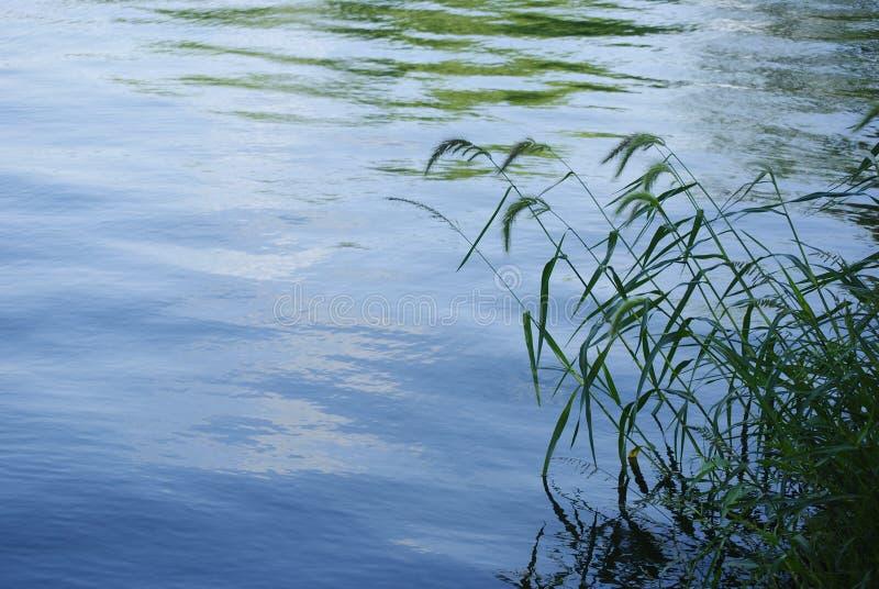 lakeside fotografia de stock royalty free