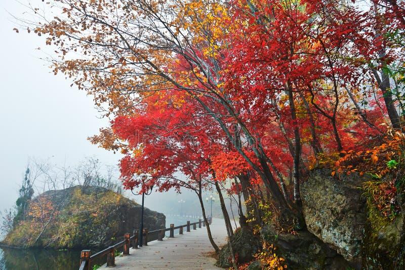 Lakeside för röd lönn royaltyfri fotografi