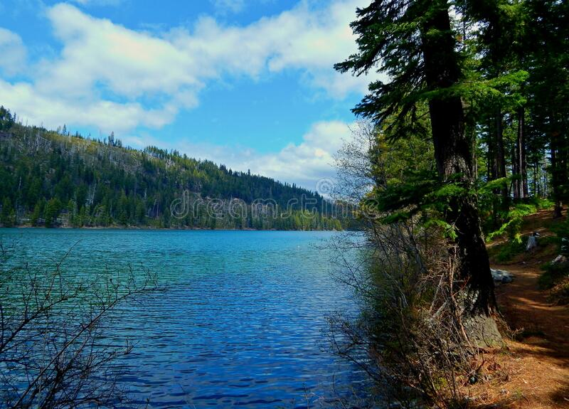 Lakeside Joy. Hiking trail view along the south shore of Suttle Lake by Link Creek Campground - near Sisters, OR stock images