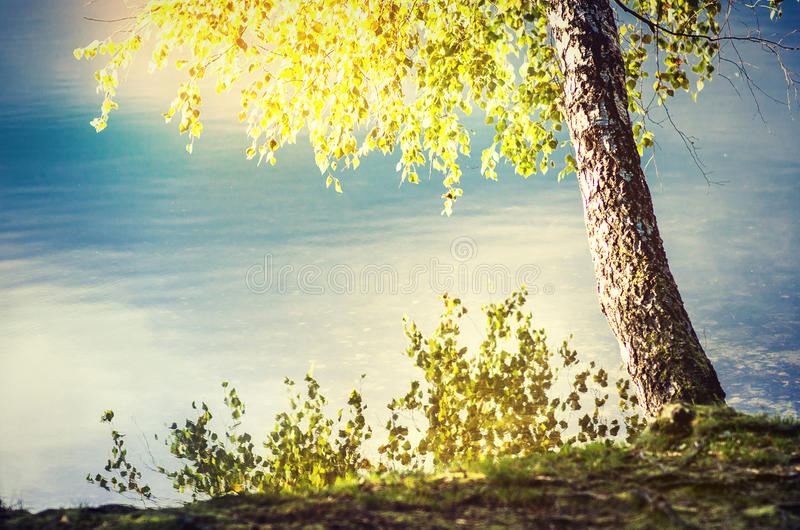 Lakeside in sun royalty free stock photography