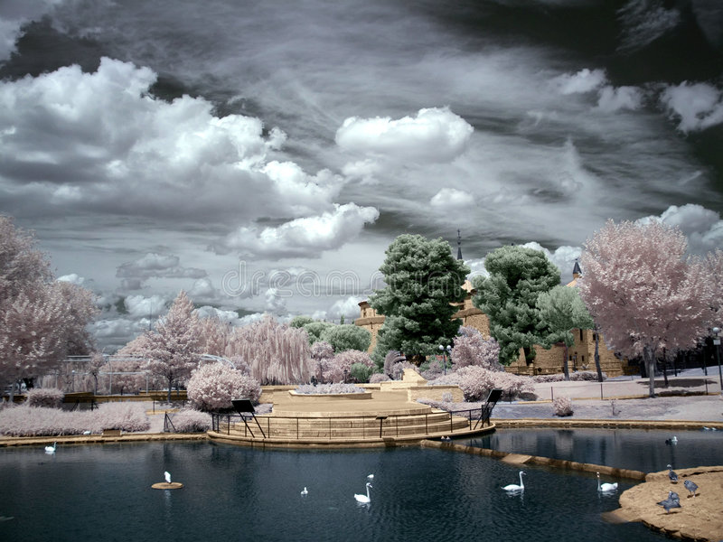 lakeswan royaltyfria foton