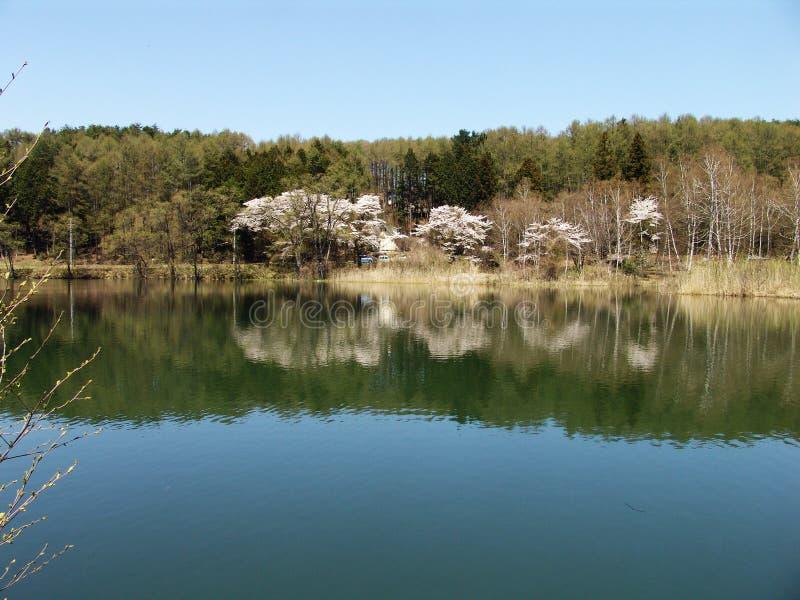 Lakeume arkivbild