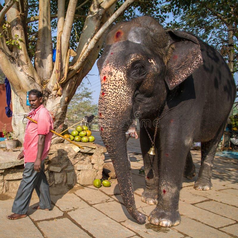 Lakshmi, l'éléphant de temple, et son gardien images stock